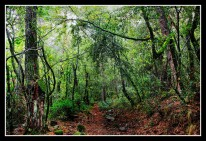 Bosque01
