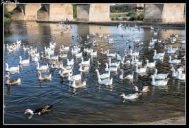 08 Puente de Palmas