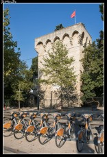 65 Torre de los pinos