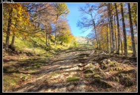 07 Bosque de Gamueta