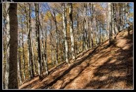 10 Bosque de Gamueta