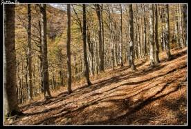 11 Bosque de Gamueta