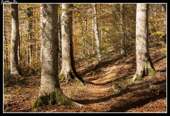 12 Bosque de Gamueta