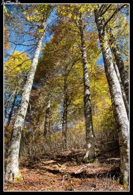 13 Bosque de Gamueta