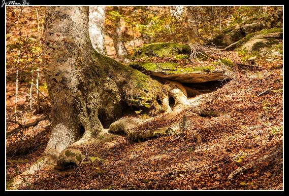 14 Bosque de Gamueta