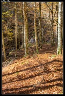 15 Bosque de Gamueta