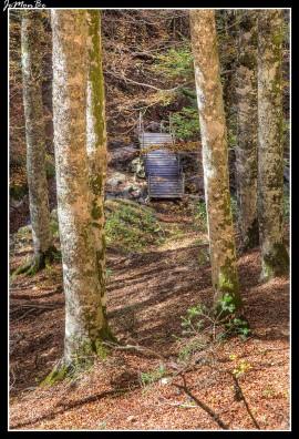 16 Bosque de Gamueta
