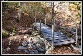 17 Bosque de Gamueta