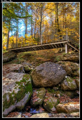 19 Bosque de Gamueta