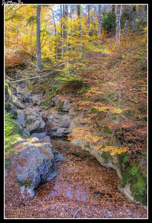 20 Bosque de Gamueta