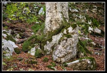 21 Bosque de Gamueta