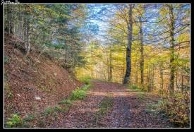 25 Bosque de Gamueta