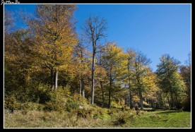 27 Bosque de Gamueta