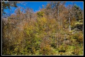 28 Bosque de Gamueta