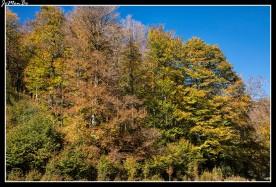 29 Bosque de Gamueta