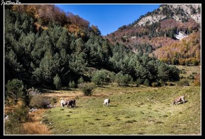 31 Bosque de Gamueta